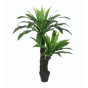 Bird's Nest Fern W/Pot 120cm OAA-KS