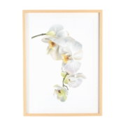 Framed Glass Orchid Stem 60cmx80cm ES-HD25