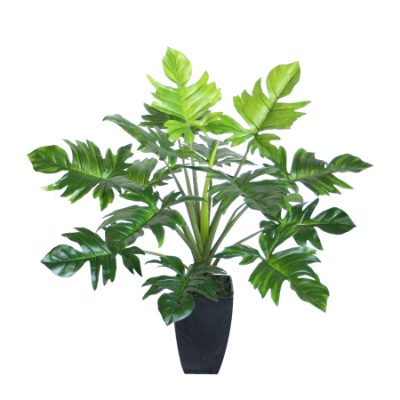 Philodendron w/pot