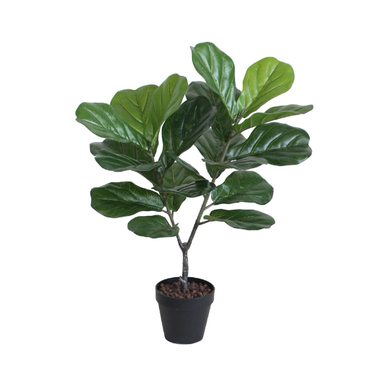 75cm fiddle leaf tree w/pot